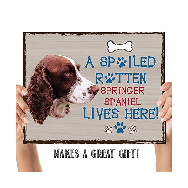 "Springer Spaniel-Dog Poster Print-10 x 8"" Wall Decor Sign-Ready To Frame.""A Spoiled Rotten Springer Spaniel Lives Here"". Pet Wall Art for Home-Kitchen-Garage. Gift-English Springer Spaniel Owners! 4"