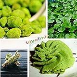 Go Garden 200Pcs: 100 / 200Pcs Wasabi Seeds Japanese Horseradish Seed Vegetable Hot Sell