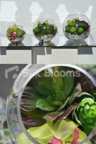 Impresionante y moderna Juego de 3 pecera verde arreglos florales con orquídeas y suculentas