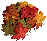 MIx fall color maple leaves