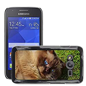 Etui Housse Coque de Protection Cover Rigide pour // M00108602 Gato británico de Shorthair Juego Mieze // Samsung Galaxy Ace4 / Galaxy Ace 4 LTE / SM-G313F