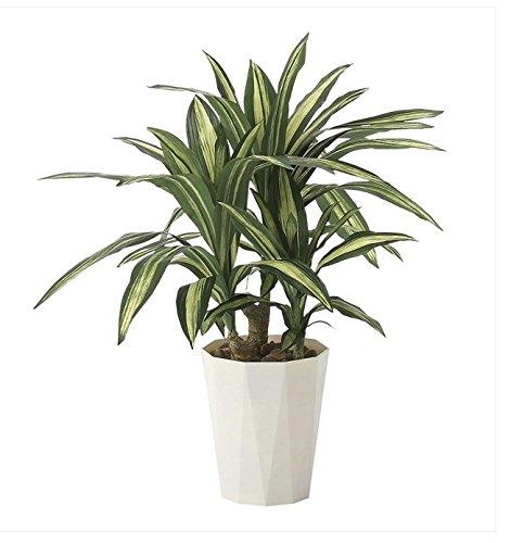 ●光の楽園 光触媒観葉植物 幸福の木70cm 628a130 B01DVETRRS