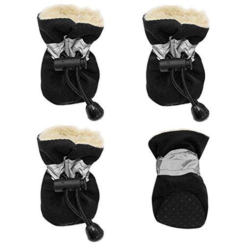 small dog footwear