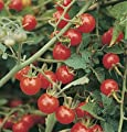 David's Garden Seeds Tomato Cherry Matt's Wild D732 (Red) 50 Open Pollinated Seeds