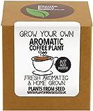 Kit per la coltivazione di pianta del caffè