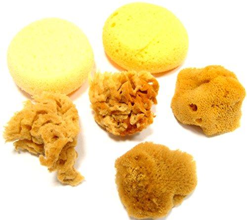 Price comparison product image Natural Sponge Artists Sea Sponges Textures Watercolour Sponge Pack Sea Sponges