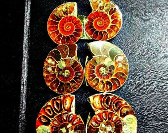 153ct Ammonite and Ammolite Lot of 6 Cut and Polished Slices Fossil Specimens. Wire Wrapping and Jewelry Making Fossil Gemstones.