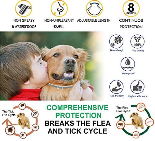 Yancott Flea Dogs Cats 8 Months - Safe Non Toxic - Control - Any Size - - Collar Flea Collar