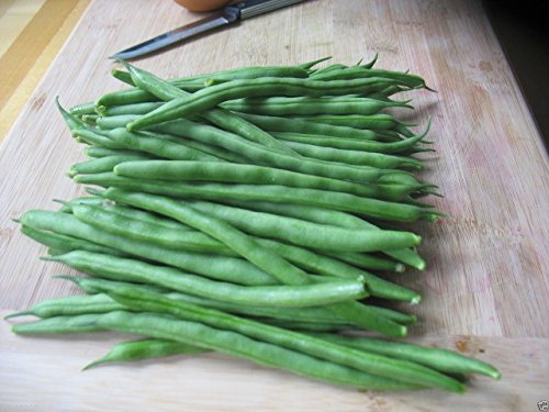 200 Bean, Kentucky Blue Pole, Pods up to 9 inches long. AAS award-winner ! from Phaseolus vulgaris