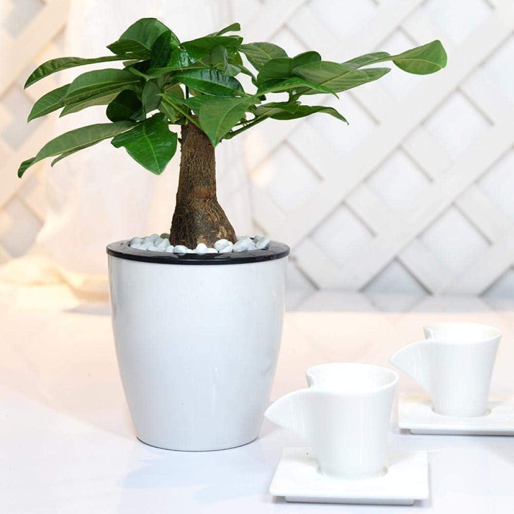 JKQ Flor Perezosa Maceta automática de absorción de Agua Creativa Multi-Carne Planta Resina hidropónica en Maceta Cuenca Redonda plástico Flor Pot
