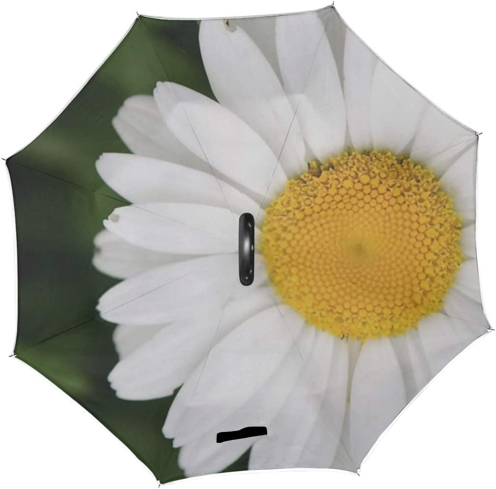Double Layer Inverted Inverted Umbrella Is Light And Sturdy Beautiful White Daisy Full Bloom Spring Reverse Umbrella And Windproof Umbrella Edge Nigh