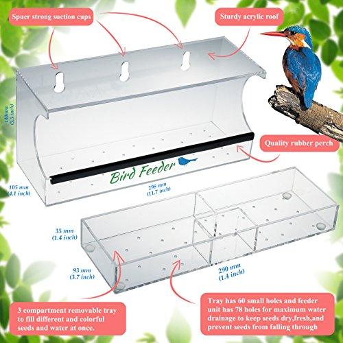 Review Bird Feeder, Window Bird