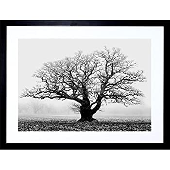 Old oak tree black white mist fog photo framed art print picture mount f12x634