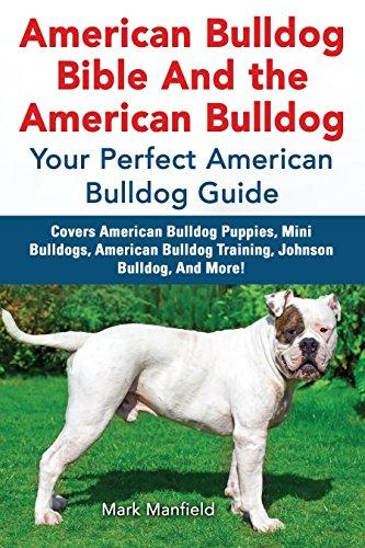 American Bulldog Bible And the American Bulldog: Your Perfect American Bulldog Guide Covers American Bulldog Puppies, Mini Bulldogs, American Bulldog Training, Johnson Bulldog, And More! (Worldwide Furniture)