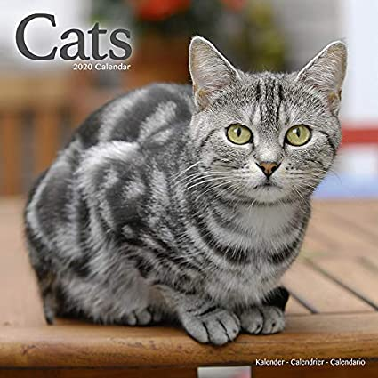 Calendario 2020 gatos todos los colores – gato – gato – gato – gato – rojo + agenda de bolsillo 2020: Amazon.es: Oficina y papelería