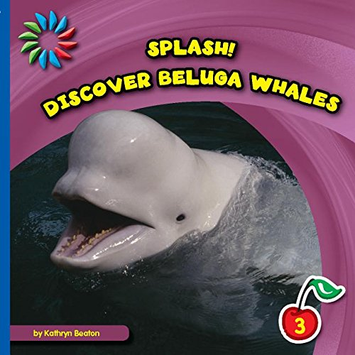 Discover Beluga Whales (Splash)