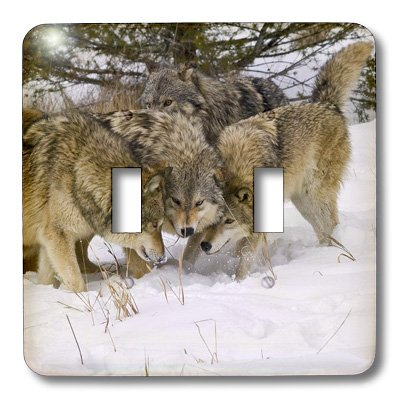 3dRose LLC lsp_11375_2 Gray Wolf Canis Lupus Alpha Male and Alpha Female  with Beta Male Interacting, Double Toggle Switch