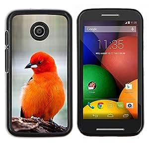 Las plumas de pájaro rojo anaranjado Furry Pico- Metal de aluminio y de plástico duro Caja del teléfono - Negro - Motorola Moto E / XT1021 / XT1022