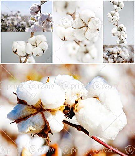 20pcs / bolsa blanca de algodón Gossypium cultivos de semillas Semillas de algodón, semillas de algodón semillas DIY planta de jardín: Amazon.es: Jardín