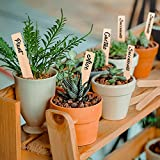 Whaline 50Pcs Wooden Plant Labels with A Marker