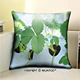 PleayeL Soft Canvas Throw Pillow Covers Cases for Couch Sofa -close up green leaf of strawberry at farm in japan that are growing in greenhouses Print 18 x 18(45 x 45 cm)