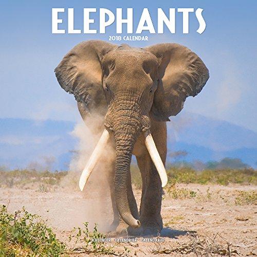 Elephant Calendar - Calendars 2017 - 2018 Wall Calendars - Animal Calendar - Elephant 16 Month Wall Calendar by Avonside