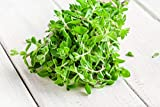 Sweet Marjoram Herb Seeds - Non-GMO 0.25g, Approximately 1000 Seeds