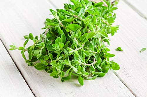 Sweet Marjoram Herb Seeds - Non-GMO 0.25g, Approximately 1000 Seeds ()