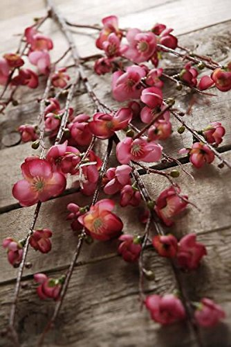 (Richland Flowering Quince Branches 45