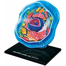 Beautifully detailed Animal Cell Anatomy Model - 24 detachable parts! (Age 8+)