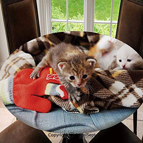 Elastic Edged Round Tablecloth Kittens and Mittens Newborns Baby Animals in an Plain Blanket Wood Play Toys Adorable for Thanksgiving, Catering Events, Dinner Parties, Special Occasions or Everyday