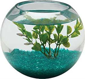 aquarius 1 2 gallon glass bowl