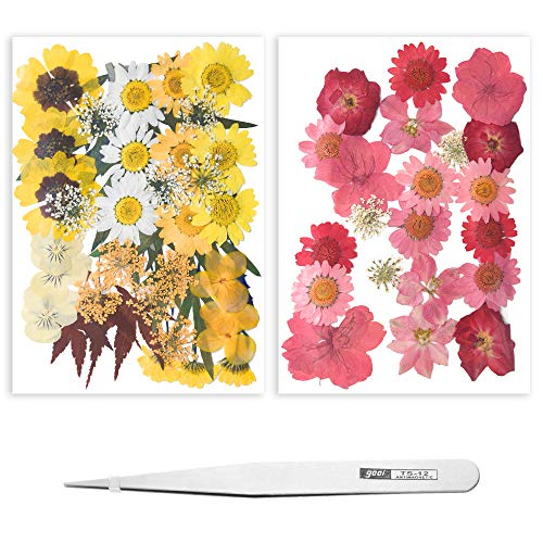 Yakuin 59 PCS Real Dried Pressed Flowers Leaves Petals Colorful Daisies for DIY Candle Resin Jewelry Nail Pendant Crafts Making Art Floral Decors (Pink Yellow)