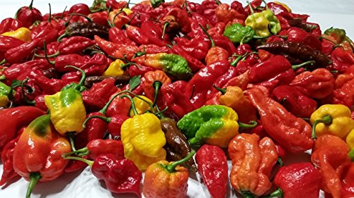 Fresh Super Hot Peppers - Mixed Box: Carolina Reapers, Ghost, Scorpion, ETC. by Bohica Pepper Hut