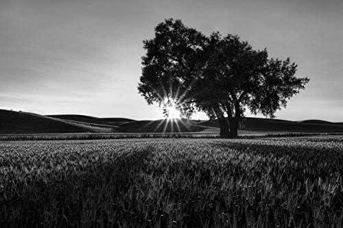 木の枝を通して輝く太陽壁紙-自然壁紙-#34900 - 白黒の キャンバス ステッカー 印刷 壁紙ポスター はがせるシール式 写真 特大 絵画 壁飾り120cmx80cm
