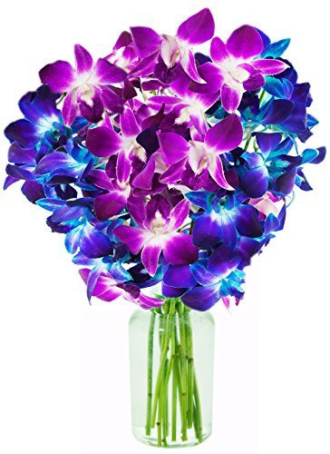 KaBloom Exotic Orchid Bouquet of Fresh Cut Blue and Fuchsia Dendrobium Orchids from Thailand: 5 Blue Dendrobium Orchids & 5 Purple Dendrobium Orchids with Vase
