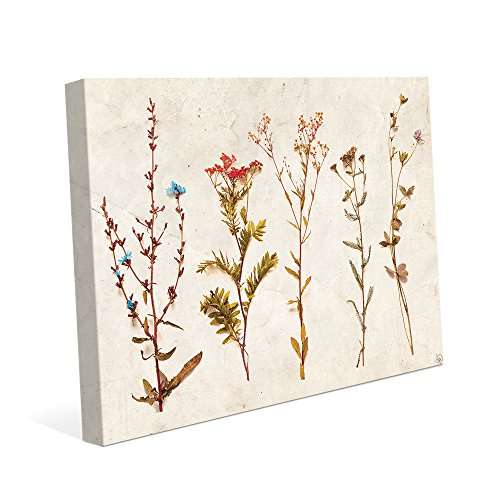 4S Dry Brown Stem Flowers - Tan Paper: Dried Pressed Assorted Colorful Flower Image for Kitchen Bedroom Bathroom Wall Art Print on Canvas