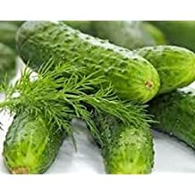 Organic Heirloom Boston Pickling Cucumber 50+ Vegetable seeds NON-GMO fresh seeds