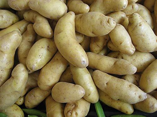 Raflesa 5lbs 5-15 Lbs - Austrian Crescent Fingerling Seed Potatoes - 2019 Spring Certified Seed Potato, Garden Planting! Non-GMO Heirloom Tuber Spud