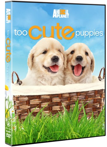 (Too Cute Puppies)