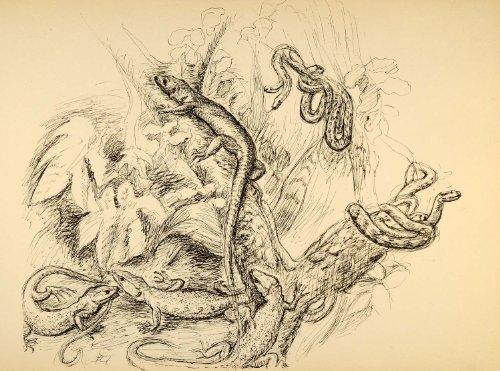 1944-print-wildlife-art-ernst-denzler-reptiles-snakes-original-halftone-print