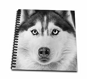amazon com 3drose db 11326 1 siberian husky drawing book 8 by 8