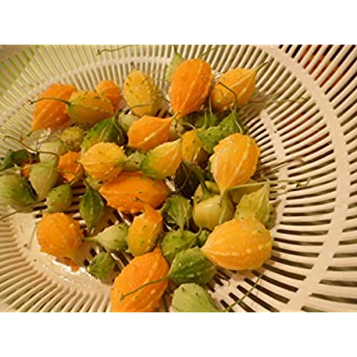 Jamaican Cerasee/Small Bitter Melon/Gourd/Karela 20 Plus Seeds - : Garden & Outdoor
