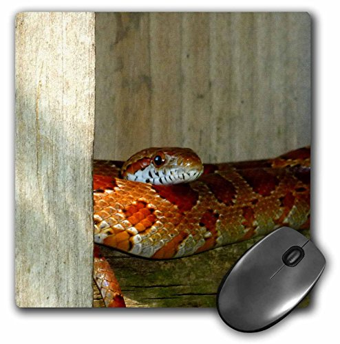 3dRose Susans Zoo Crew Animals Reptile - red rat snake side head sq - MousePad (mp_156087_1) ()