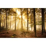 Wall Mural Photo Wallpaper Morning Forest Indicators KT391 Mist, Mood Tree Wallpaper Photo Size 420 x 270 cm XXL Wallpaper Paste Wallpaper