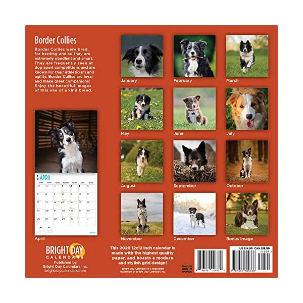 2020 Border Collies Wall Calendar by Bright Day, 16 Month 12 x 12 Inch, Cute Dogs Puppy Animals Colley 2