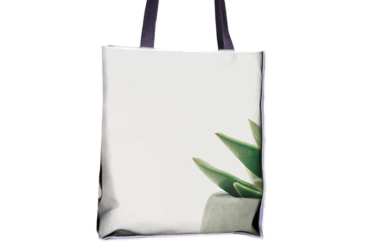 Amazon.com: Plantas, suculentas, en maceta, blancas en todo ...