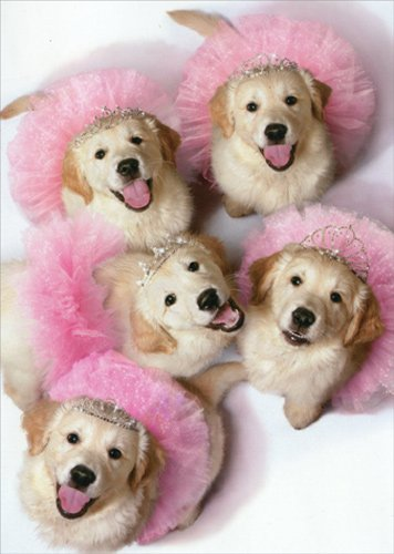 Golden Puppies In Tiaras And Tutus - Avanti Stand Out Pop Up Funny Birthday Card