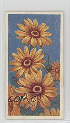 (Ursinia (Trading Card) 1939 Godfrey Phillips Annuals - Tobacco [Base] #46)