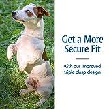 PetArmor Plus Flea & Tick Collar for